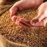 Хранение зерна в Жесказгане фото