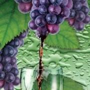 Сок виноградный концентрированный (экстракт) фото