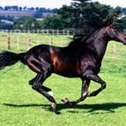 Лошади для бега фото
