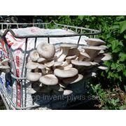 Мицелий гриба фото