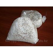 Мицелий гриба вешинки фото