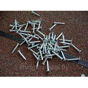 Гвозди кровельные оцинкованные Шинглас Shinglas 30*3,5мм фото