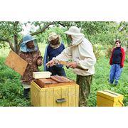 Культура и быт местечек Ракова и Ивенца -( «Мир пчел») фото