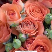 Букеты из роз фото