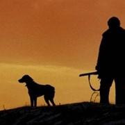 Услуги по содействию, развитию промысловой охоты фото