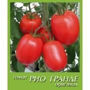 Голландский томат Рио-Гранде F1 в Алматы фото