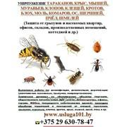 Уничтожение насекомых, грызунов (крысы, тараканы, муравьи, клещи, блохи, комары, осы) др. фото