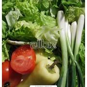 Выращиваем и продаем оптом капусту, помидоры, перец, баклажаны, лук, картофель фото