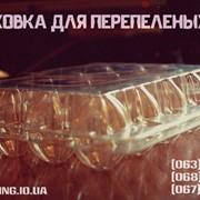 Упаковоки для перепелиных яиц фото