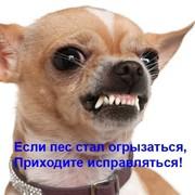 Дрессировка собак с проблемным поведением – дрессировка через понимание. фото