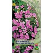 Бальзамин Розовая милашка фото
