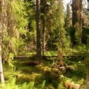 Воспроизводство и выращивание лесов фото