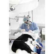 Лечение блефаритов фото