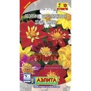 Цветы Георгина Коларетта денди (смесь) (0,5 гр) фото