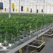 Лотки для выращивания растений в промышленных теплицах фото