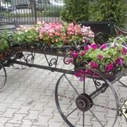 Кованные подставки для цветов, перголы фото