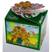 Календула Азбука растений Bontiland наборы для выращивания, (411555) фото