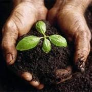 Внесение органических удобрений, комплексных удобрений для почвы и растений фото
