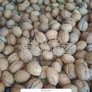 : Орехи грецкие фото