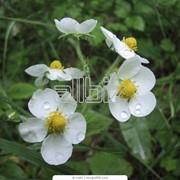 Внесение органических удобрений. Органическое земледелие. фото
