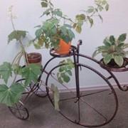 Цветочница вело фото