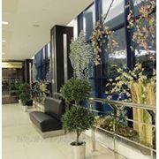 Декорация помещений искусственными гелиевыми растениями (ботанические копии) фото