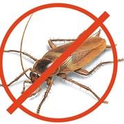 Уничтожение тараканов Алматы фото