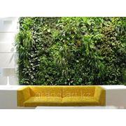 Фитостена - стены из живых растений фото
