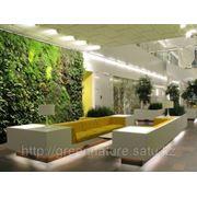 Озеленение офисов, квартир, коммерческих помещений. Фитодизайн. фото