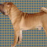 Вязка собак шарпей фото