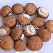 Закупка грибов фото