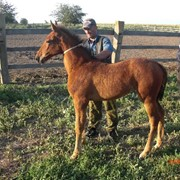 Молодые лошади фото