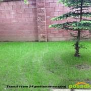 Тканый газон фото