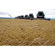 Бизнес план в сельскохозяйственной сфере фото