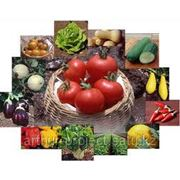 Бизнес-план аграрного рынка фото