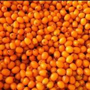 Облепиха ягоды плоды облепихи свежие и сухеные от производителя возможен экспорт фото