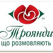 Разработка и создание логотипа. Фирменного стиля. фото