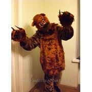 Медведь фото