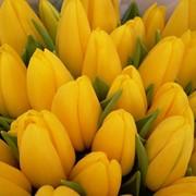 Тюльпаны от производителя белорусские фото