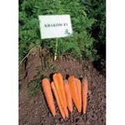 Морковь Краков F1 (калибр>1.6) 1 000 000 сем. Рийк Цваан. фото