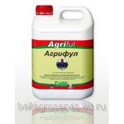 Агрифул фото