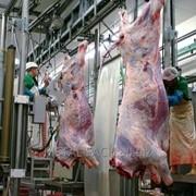 Линия по убою скота (КРС и свиней) фото