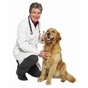 Консультации опытных ветеринаров фото