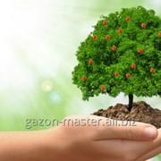 Услуга ухода за деревьями фото