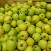 Яблоки зимние фото