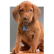 Услуги ветеринарные по диагностике, лечению и профилактике заболеваний животных. фото