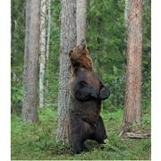 Осенняя охота на Камчатского медведя фото