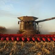 Услуги по уборке подсолнечника и кукурузы комбайнами claas фото