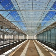 Строительство тепличных комплексов (По технологиям Южная Корея, Израиль, Китай, Голландия) фото