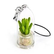 Счастливый Minicactus брелок с живым растением фото